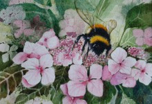 Bumblebee on Pink Hydrangea by Gill Smith