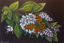 Butterfly on Buddleia by Gill Smith