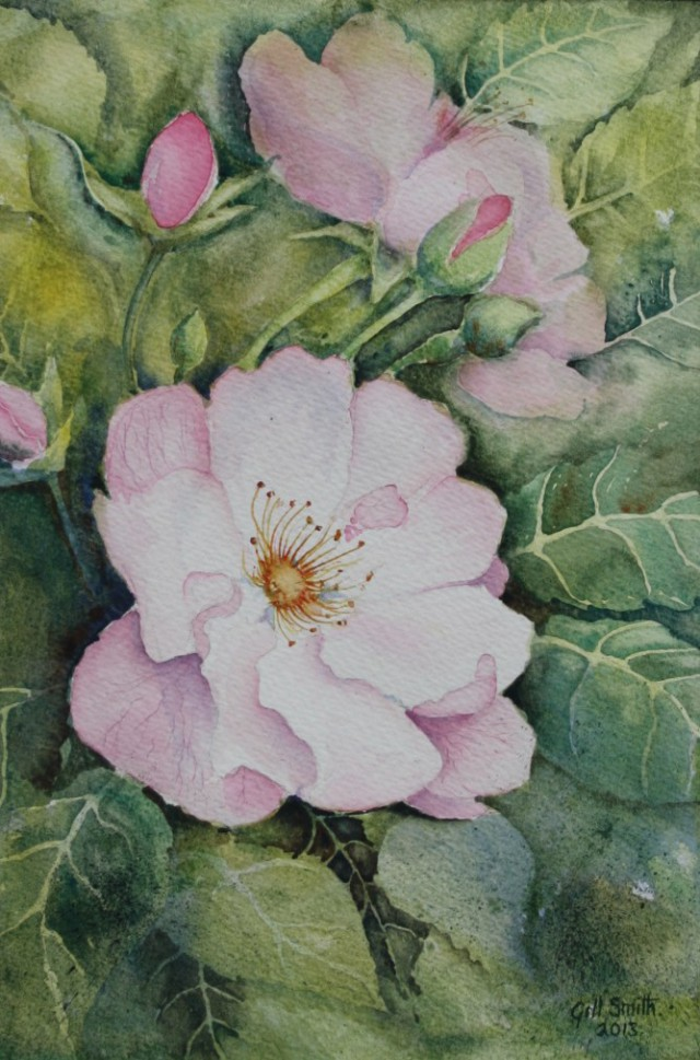 Rose by Gill Smith