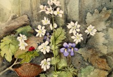 Spring Flowers by Gill Smith